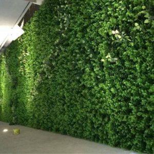 Evergreen vertical garden wall