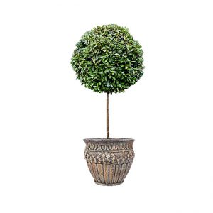 Decorative trees with one round trimmed top