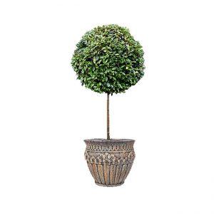 Dairəvi formada təkli dekorativ ağac