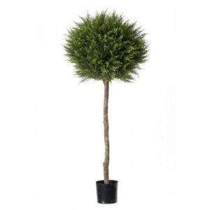 Cypress single ball topiary