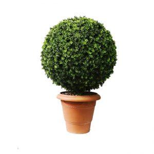 Dairəvi formada dekorativ ağac